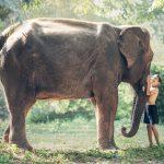 elephant-1822492_1920